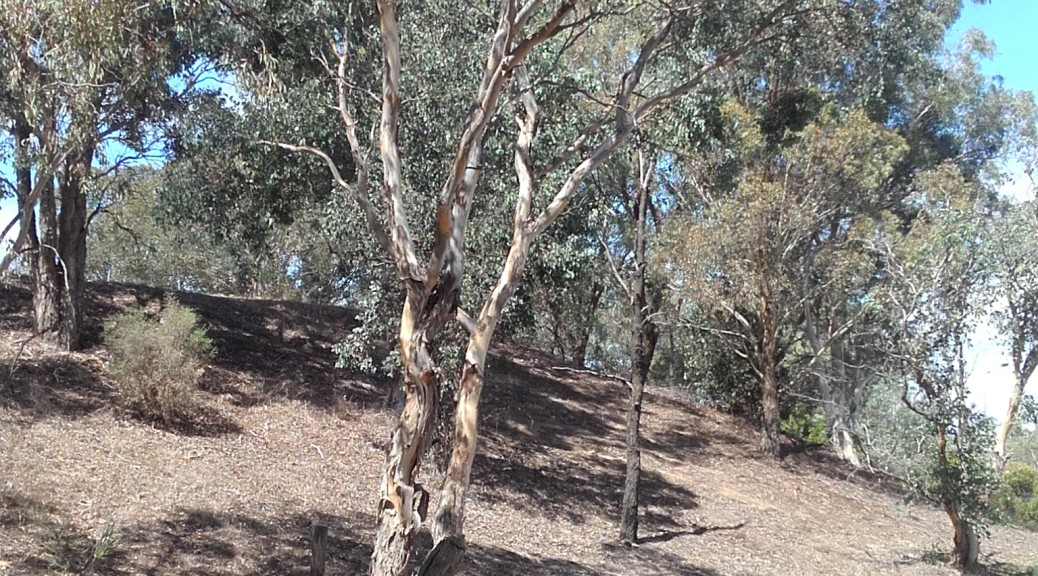 Possums Bushland
